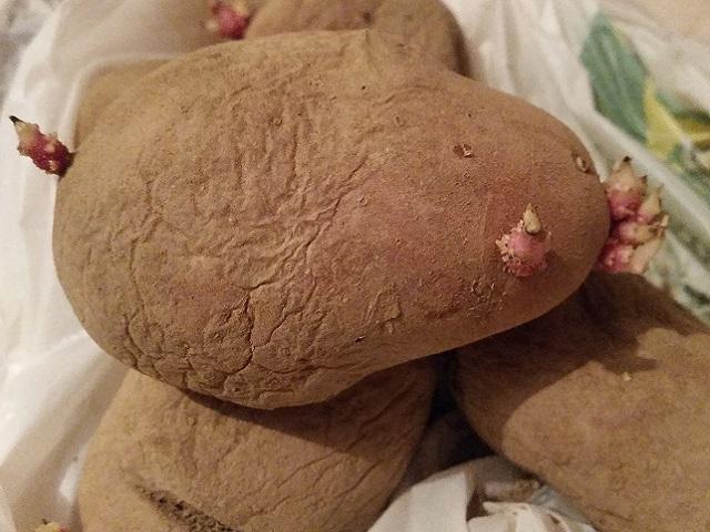 Izbjegavajte klijanje krompira: Kako ga čuvati tokom zime?