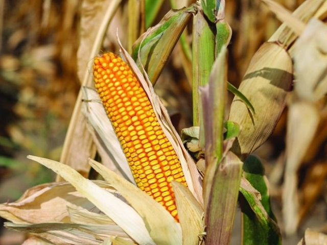 Poljoprivreda u Semberiji na izdisaju: Za četiri godine od posla odustalo 8.400 osoba