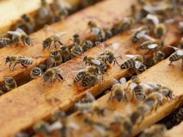 Srebrenica ima dobre resurse za razvoj pčelarstva
