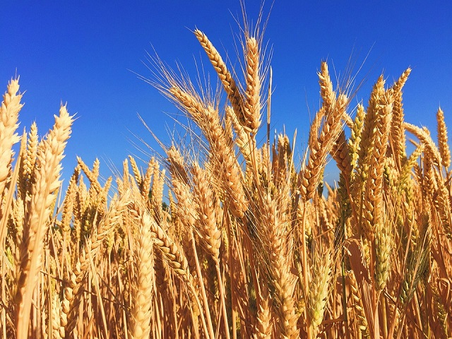Proljetne dileme semberskih poljoprivrednika – Šta sijati?