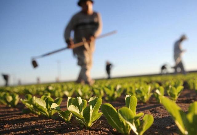 Poljoprivredni sektor će ove godine imati na raspolaganju 21 milion eura