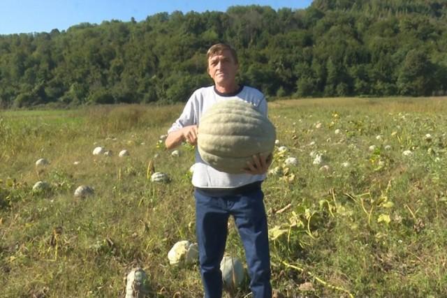 Uzgojio više od 10 tona bundeva