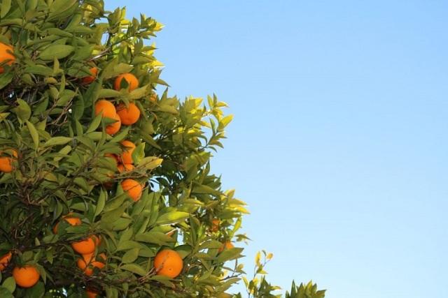 Sedam razloga zbog kojih volimo mandarine