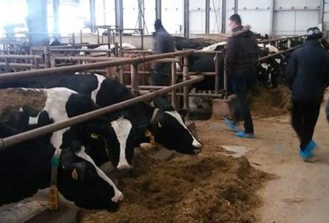 Milk Land iz Tuzle obezbjeđuje 955 plata