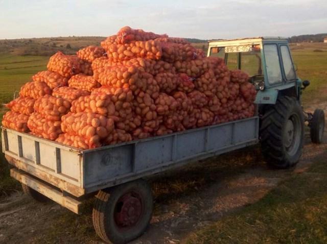 Porodica Đurović sa Sokoca – Godišnje proizvedu 150 tona krompira