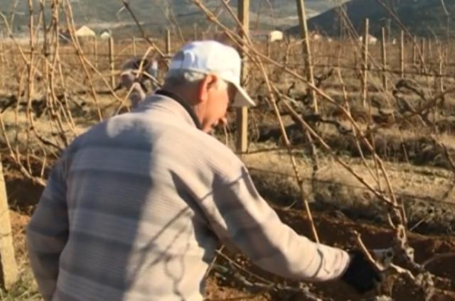 Hercegovina: Povoljni vremenski uslovi za rezidbu vinograda