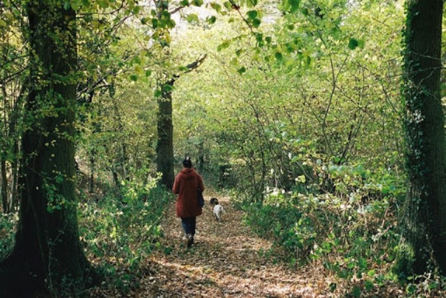 Pola sata boravka u dubokoj šumi štiti vaš imunitet čak dva mjeseca