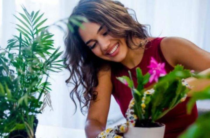 biljke-kuca-1.jpg