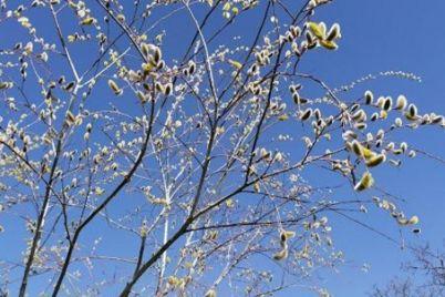drvo-cvat-behar-foto-1.jpg