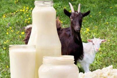 koze-sir-mlijeko-sirutka-foto-1.jpg