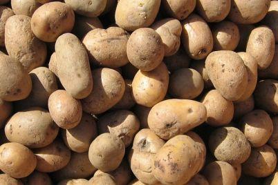 krompir-foto-1.jpg