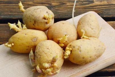 krompir-klice-2.jpg