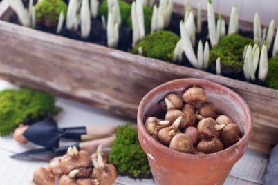 lukovice-vrt-foto-1.jpeg