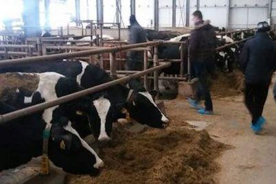 milk-land-tuzla-farma-1.jpg