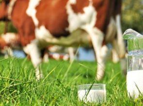 Proizvodnja mlijeka rasla uprkos pandemiji