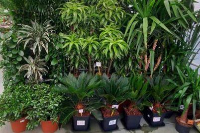 otoka-bambus-foto-1.jpg