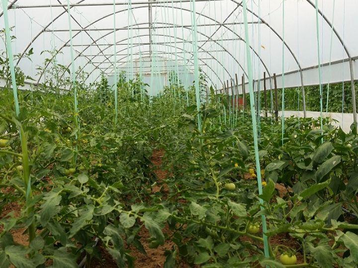 plastenik-poljoprivreda-foto-1.jpg