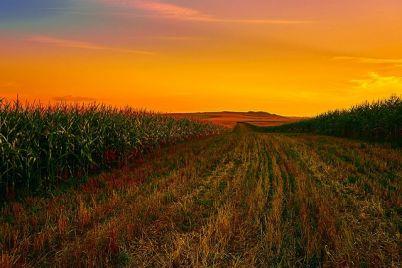 polje-kukuruza-foto-pixabay-1.jpg