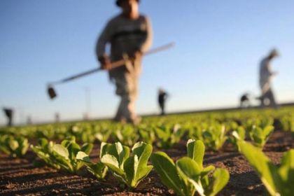 poljoprivreda-foto-1.jpg