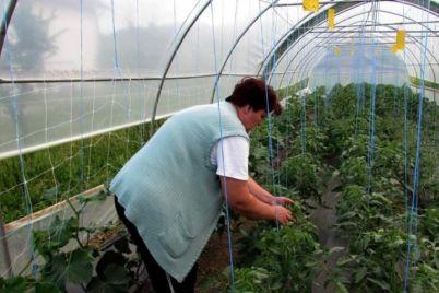 poljoprivreda-foto-5.jpg