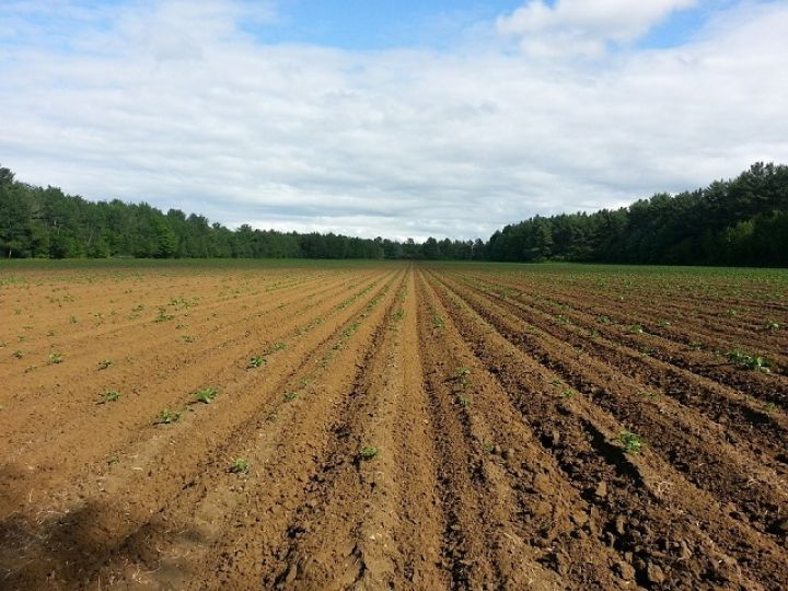 poljoprivreda-zasijane-površine-2.jpg