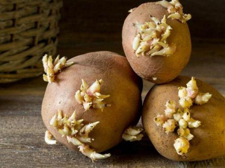 proklijali-krompir-foto-1.jpeg