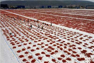 susenje-paradajza-1.jpg