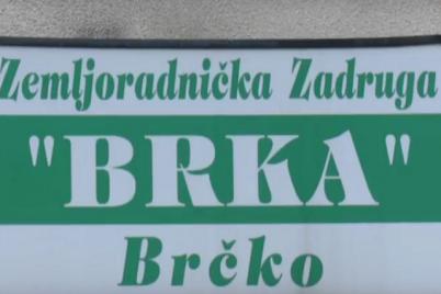 zemljoradnicka-zadruga-brka-brcko.png