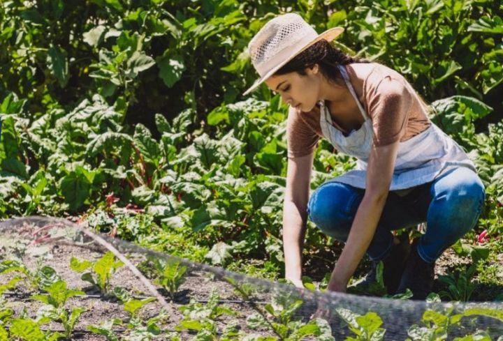 zene-poduzetnice-poljoprivreda-1.jpg